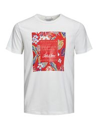 Tropicana tee ss crew neck J&J cloud dancer